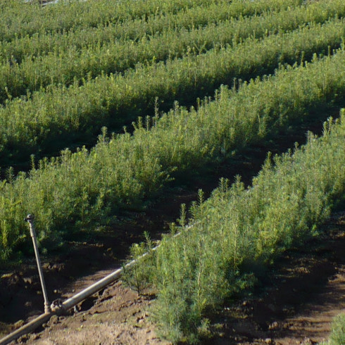 Our Products | Brooks Tree Farm